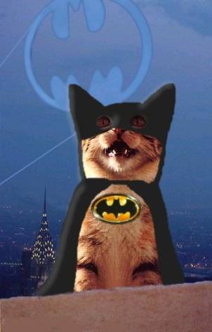 A Cat In A Batsuit