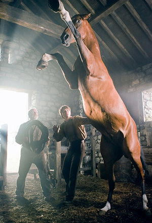 War Horse Review Movie