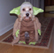 Yoda Dog
